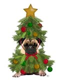 Pug, Christmas Tree Costume
