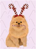 Pomeranian and Candy Canes