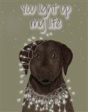 Chocolate Labrador, You Light Up