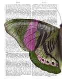 Butterfly in Green and Pink a