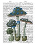 Psychedelic Mushrooms 1