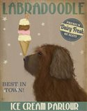 Labradoodle, Brown, Ice Cream