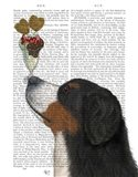 Bernese Ice Cream