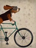 Basset Hound on Bicycle