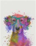 Rainbow Splash Weimaraner, Portrait