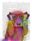 Rainbow Splash Cocker Spaniel, Portrait