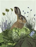 Cabbage Patch Rabbit 3