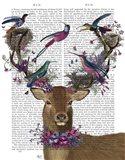 Deer Birdkeeper, Tropical Bird Nests