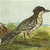 Mini Vintage Birds V