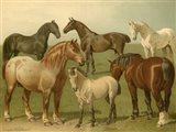 Horse Breeds II