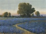 Blue Bonnet Field I