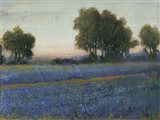 Blue Bonnet Field II