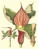 Botanical Fantasy I