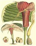 Botanical Fantasy II