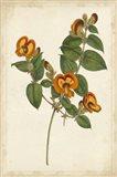 Vibrant Curtis Botanicals II