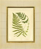 Fern with Crackle Mat (H) III