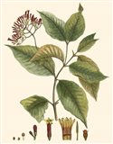 Crimson Botanical I