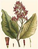 Crimson Botanical II