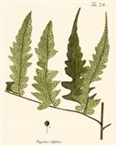 Small Antique Fern VII