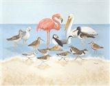 Seabird Summit