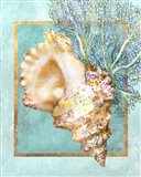 Conch Shell and Coral
