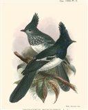 Birds in Nature V