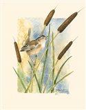 Marsh Wren and Cattails