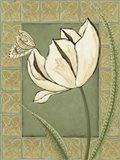 Ivory Tulip II