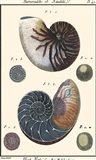 Sea Shells VI