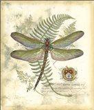 Mini Regal Dragonfly I