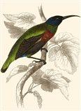 Hummingbird IV