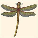 Miniature Dragonfly II