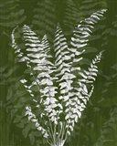 Jewel Ferns I