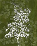 Jewel Ferns III