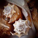 Macro Shells III