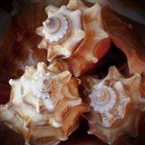 Macro Shells VII