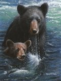 Bearly Swimming