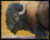 Bison Portrait III