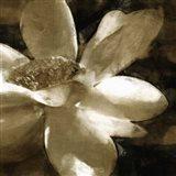 Bronze Lily III