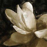 Bronze Lily V
