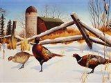 Pheasants II