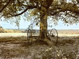 Aux Arbeils Oak