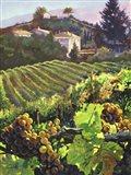 Siena Harvest