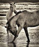 Beach Horses I
