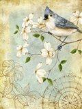Songbird Sketchbook IV