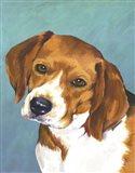 Dog Portrait-Beagle
