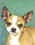 Dog Portrait-Chihuahua