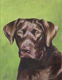 Dog Portrait-Chocolate