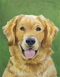Dog Portrait-Golden