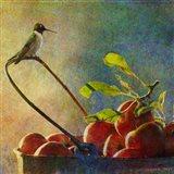 Apples & Hummer